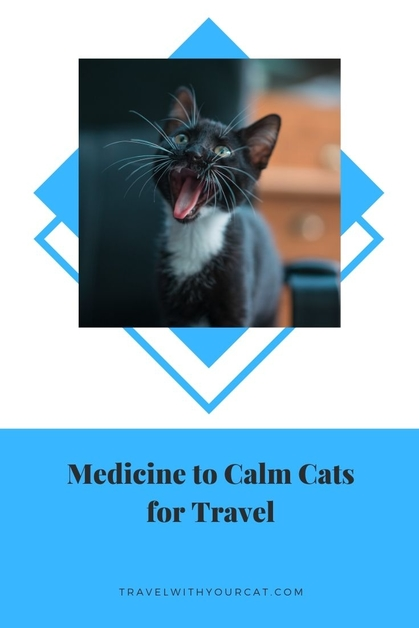 Medicine to Calm Cats for Travel