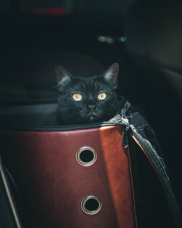 cat sitting in a cat car seat