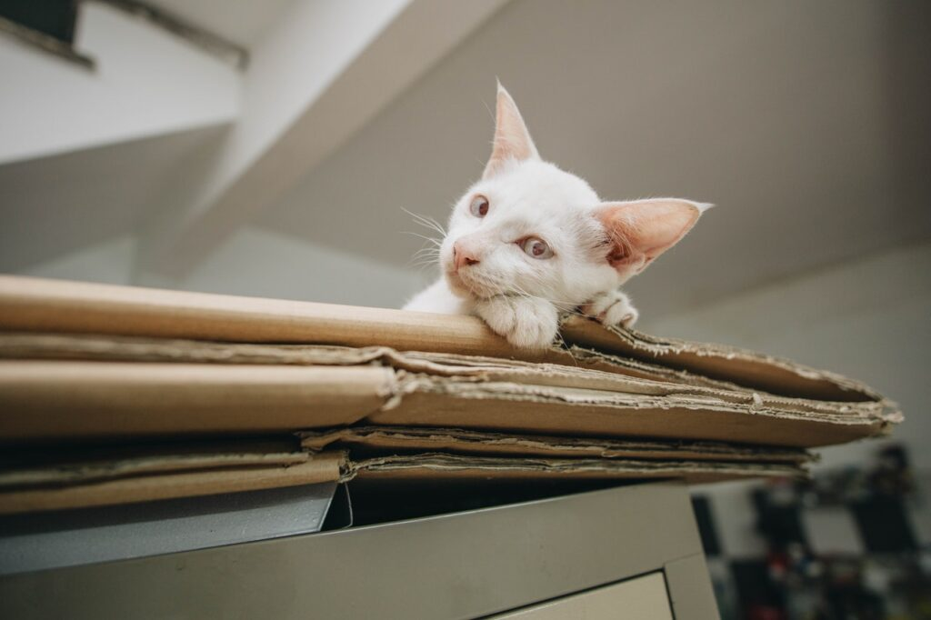 cardboard house moving boxes with a white cat on top