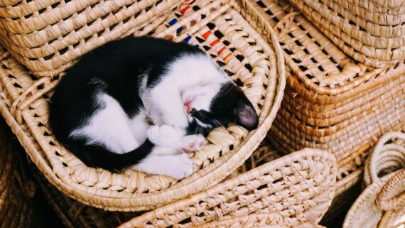 9 Things to Consider Before Buying a Wicker Cat Carrier