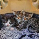 kittens in a top loading cat carrier