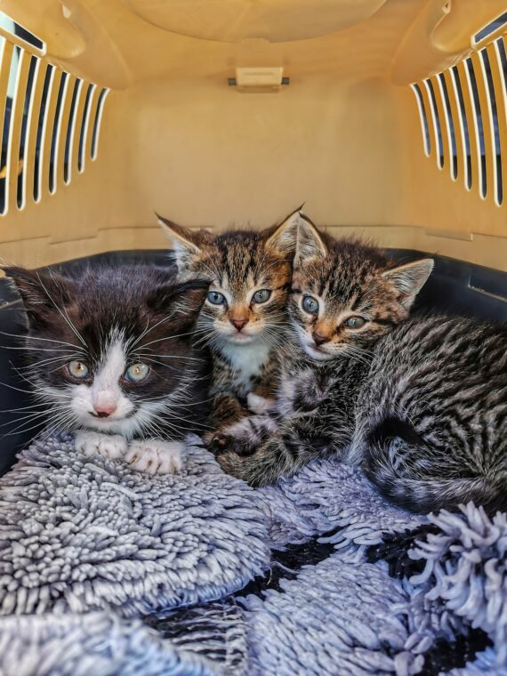 Which Top Loading Cat Carrier Should You Buy?