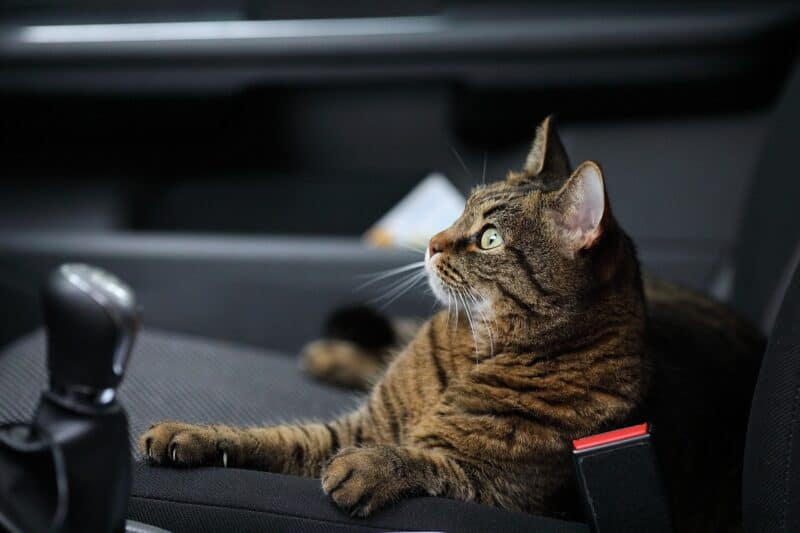 cat sitting on seat of uber