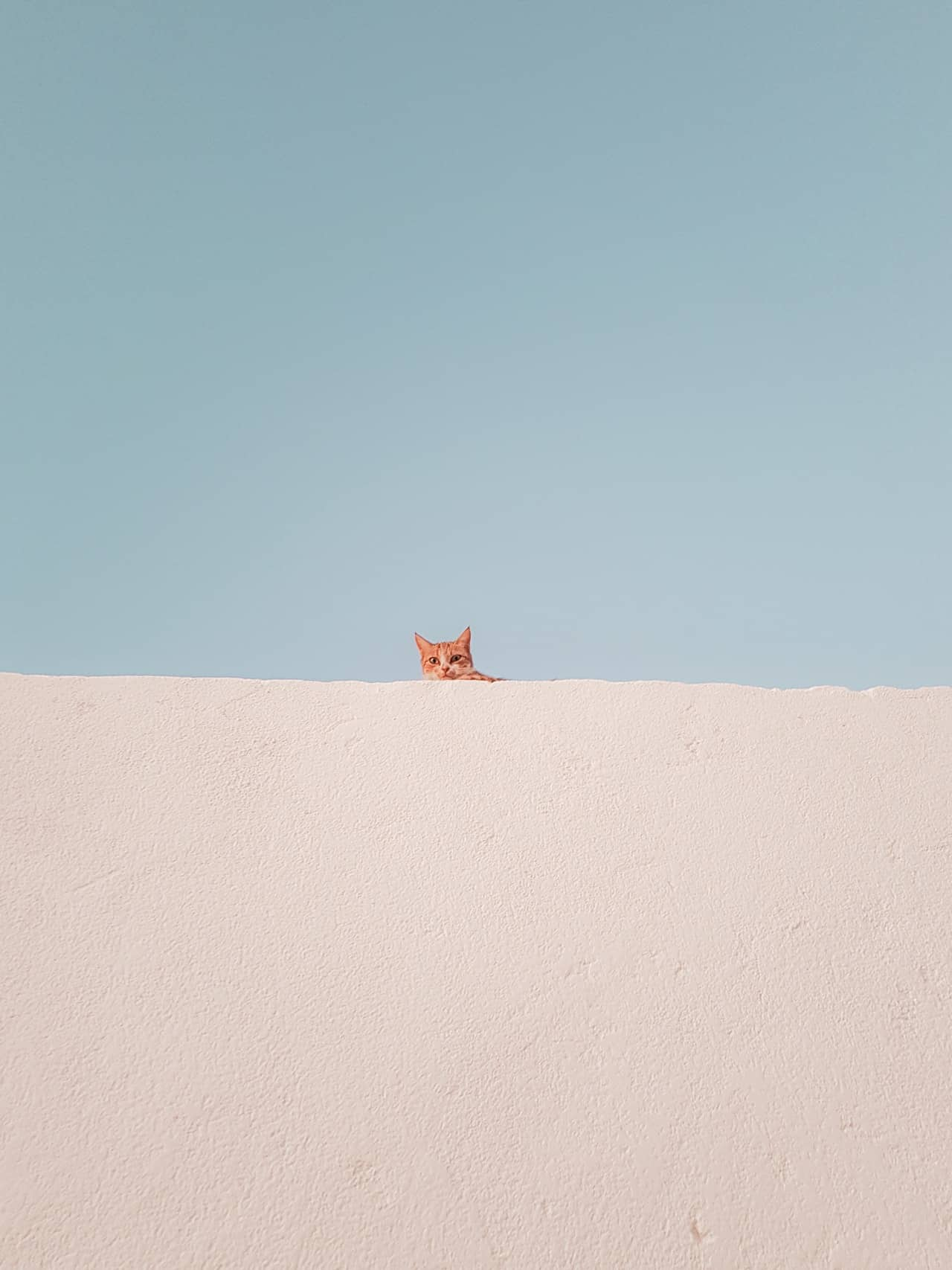 Do Cats Like Sand? - Travel With Your Cat