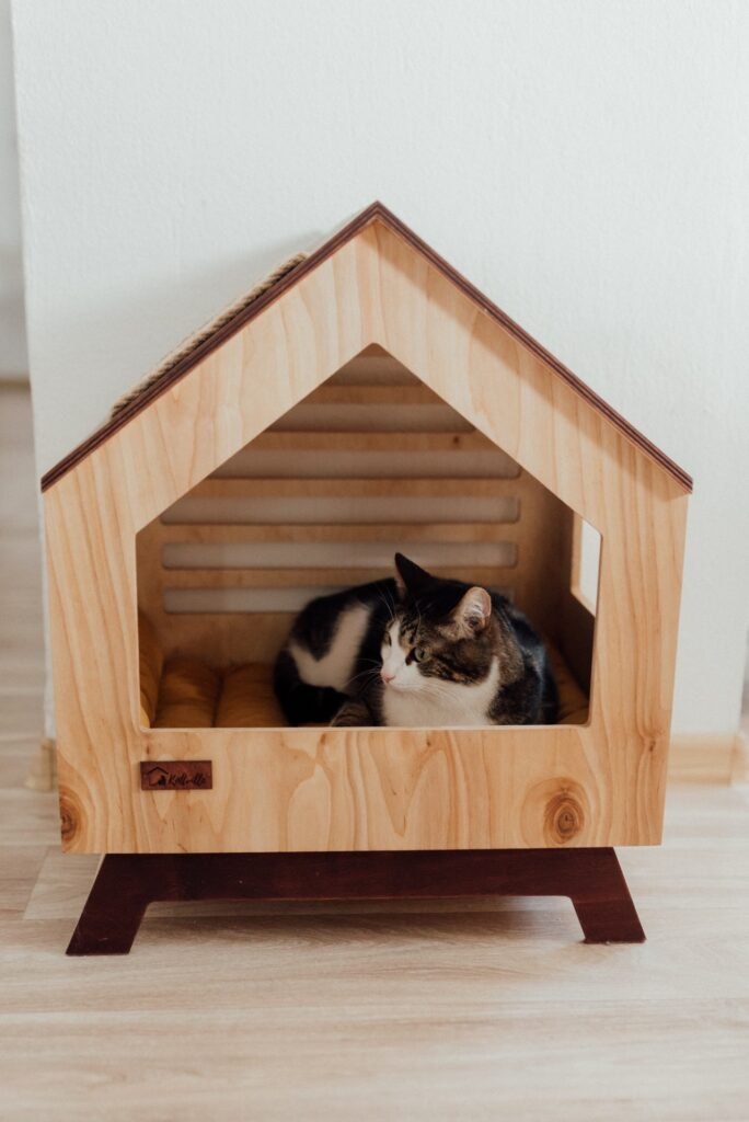 cat sitting in a wooden house