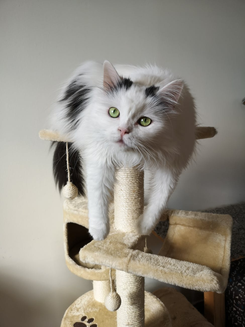 photo of white and black cat resting on cat tree